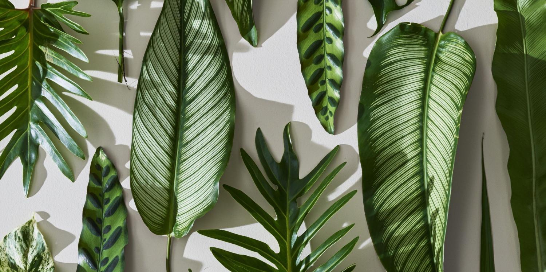 492438-tropical-leaves-desktop-wallpaper-download-tr-in-2020-desktop-wallpaper-macbook-desktop-wallpaper-art-computer-wallpaper-desktop-wallpaper