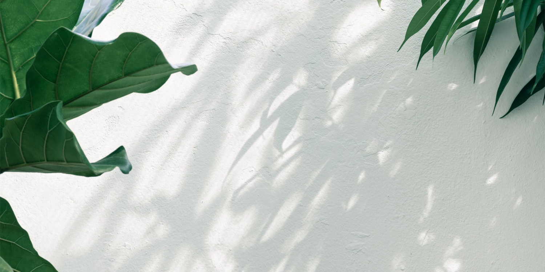 Plants-at-a-botanical-gar-5120×2880